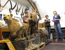 Natur Museum Luzern: hinter den Kulissen