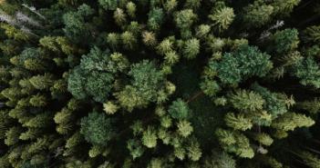 «Wald und Holz 4.0» Konzepte als Antwort auf nicht kostendeckende Waldbewirtschaftung